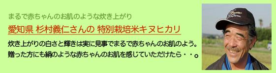 愛知県 杉村義仁さん栽培 特別栽培米キヌヒカリ